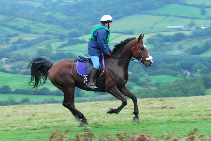 Avigliana sarà capitale di Endurance equestre
