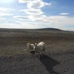 Islanda (141)