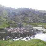 Islanda (8)
