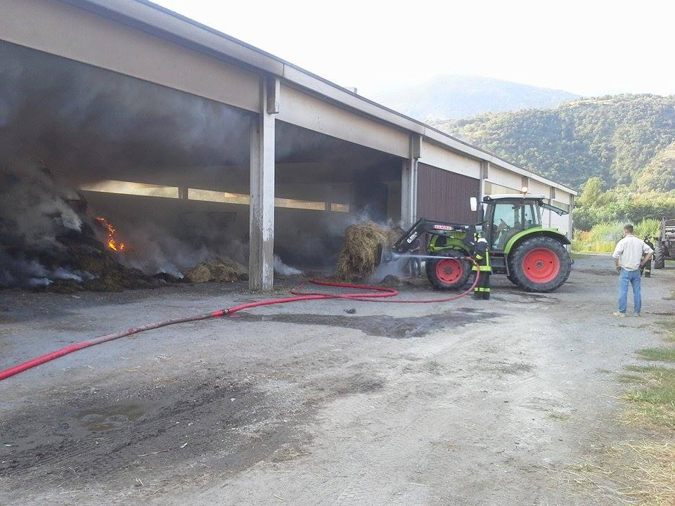 Rotoballe in fiamme a Susa, salvati 100 maiali