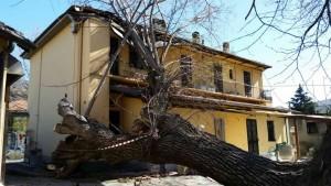 Condove, albero caduto su un'abitazione in viale Bauchiero