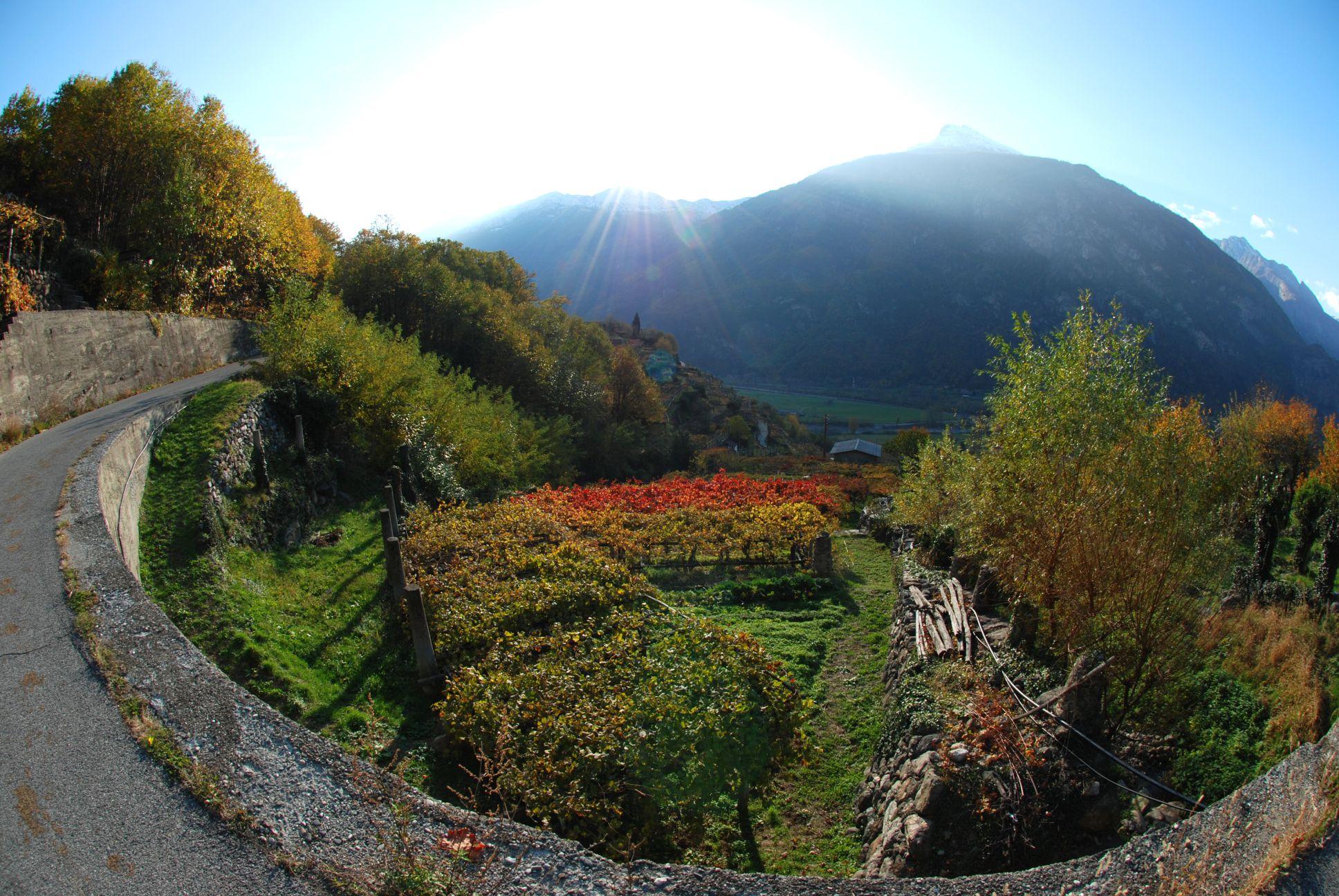 """Al Borgo Medioevale la """"Strada Reale dei vini torinesi"""" presenta il prodotto turistico """"me te"""" con un aperitivo dedicato ai prodotti del territorio"""