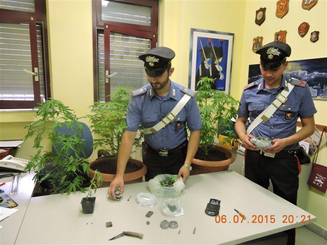 """Bussoleno, i carabinieri bloccano il """"fai da te"""" della marijuana. Un arresto e una denuncia"""
