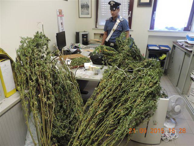 Bussoleno, marijuana a km zero: un arrestato