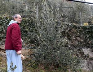 Sergio Enrietta nel suo uliveto a Borgone