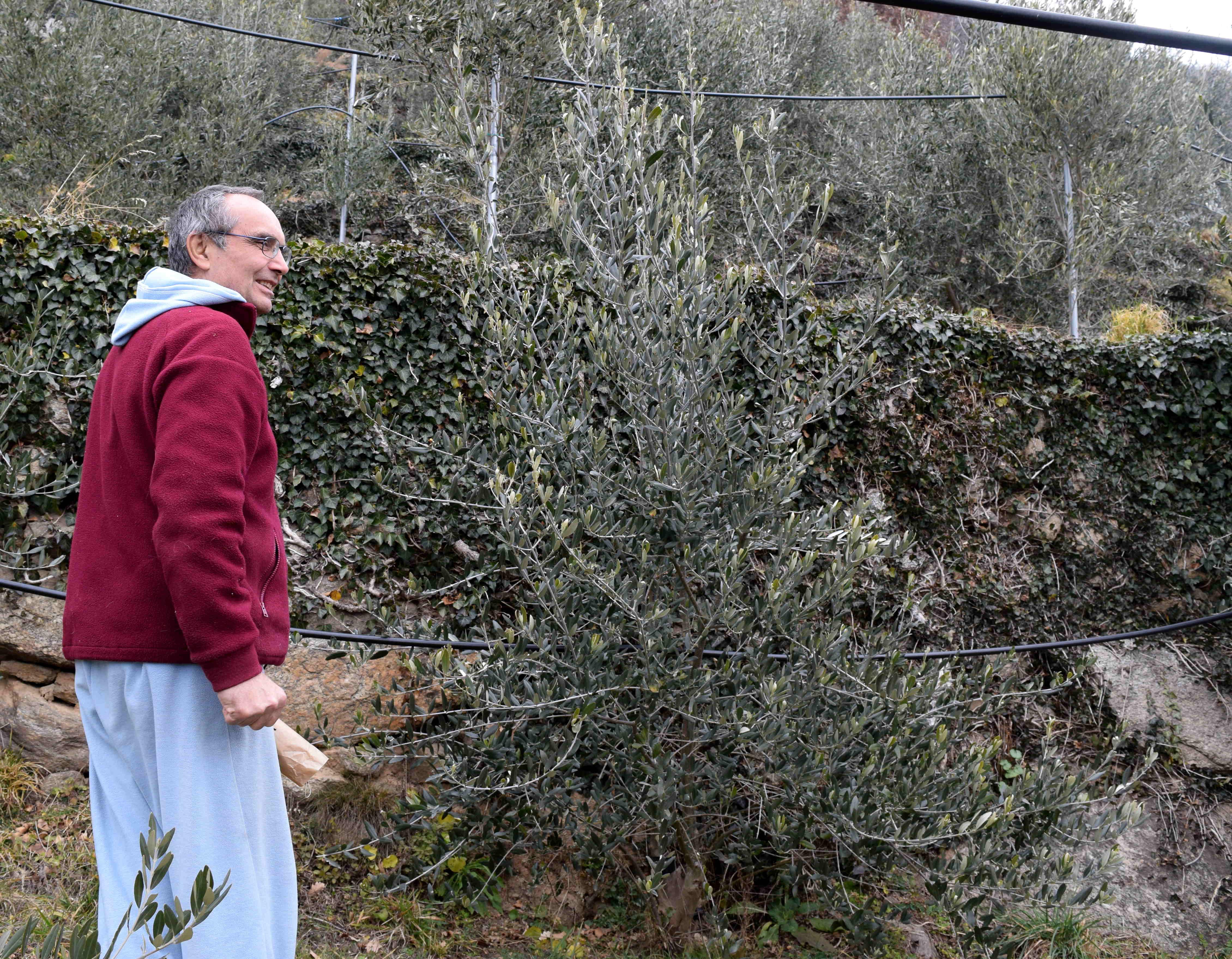 L'orto degli ulivi cresce sui monti di Borgone. La storia di Sergio Enrietta