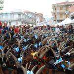 La transumanza delle capre in Viale Italia