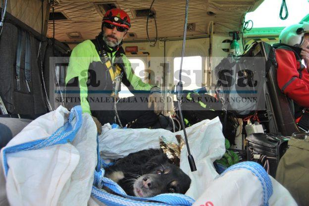 Coazze, anche un elicottero per salvare il cane ferito