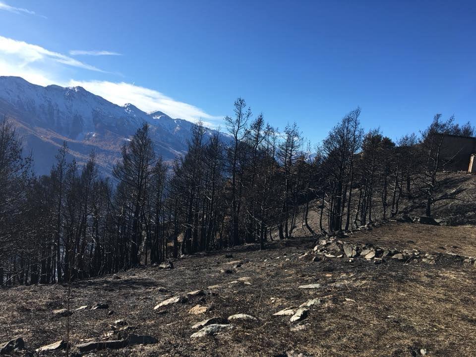 Dopo gli incendi, che fine hanno fatto gli animali selvatici? Interviene la Città Metropolitana