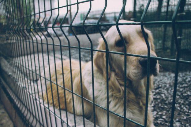 Vuoi adottare un cane? Attenzione agli appelli sui social