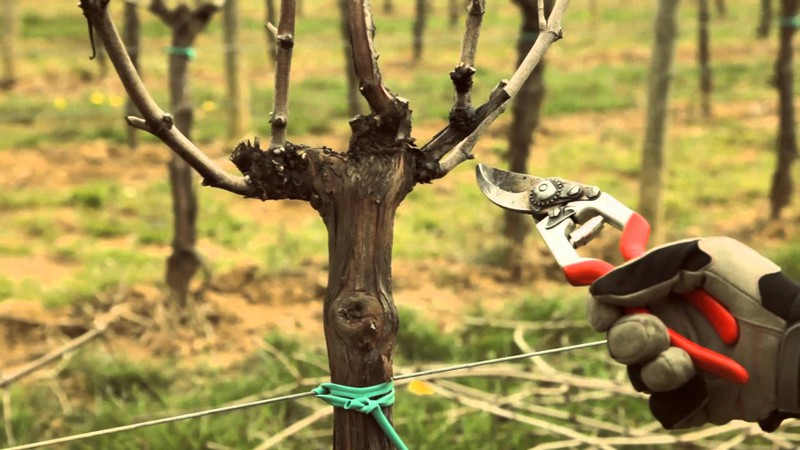Susa, Parte il corso base di potatura degli alberi da frutto