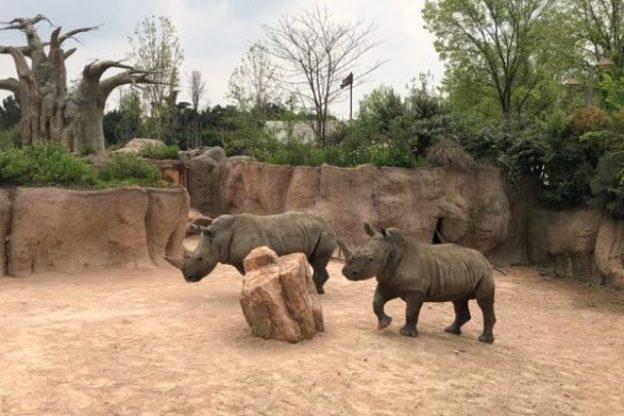 Ian e John, due rinoceronti a Cumiana
