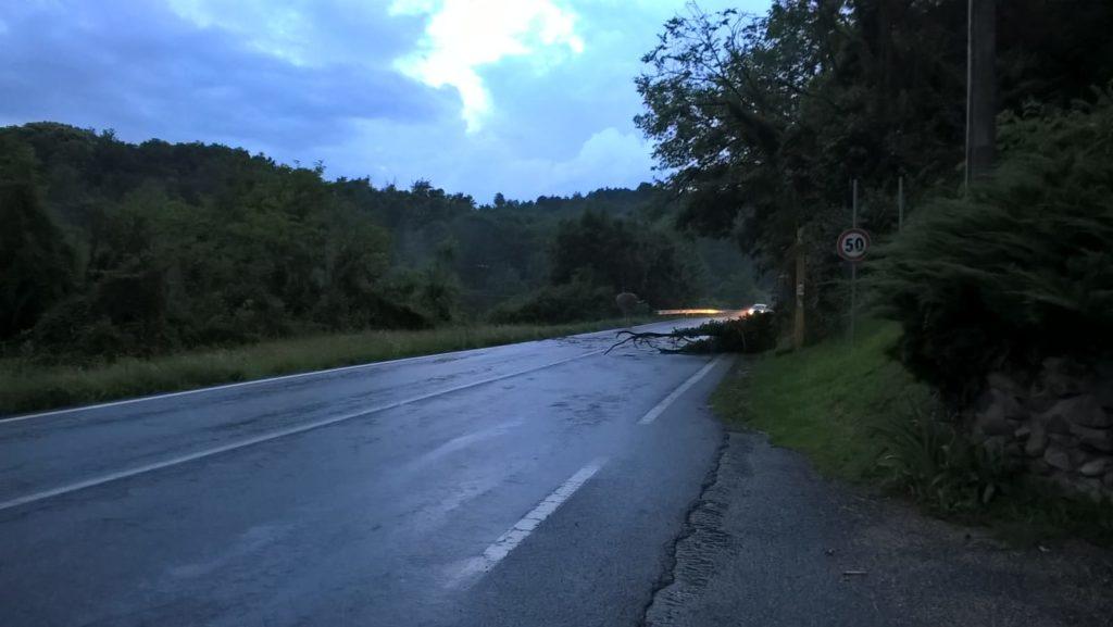 Trana, albero cade sulla strada davanti al Giardino Rea