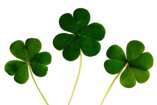 """Valsusa, Sant'Antonino """"si sposta"""" in Irlanda per un fine settimana"""