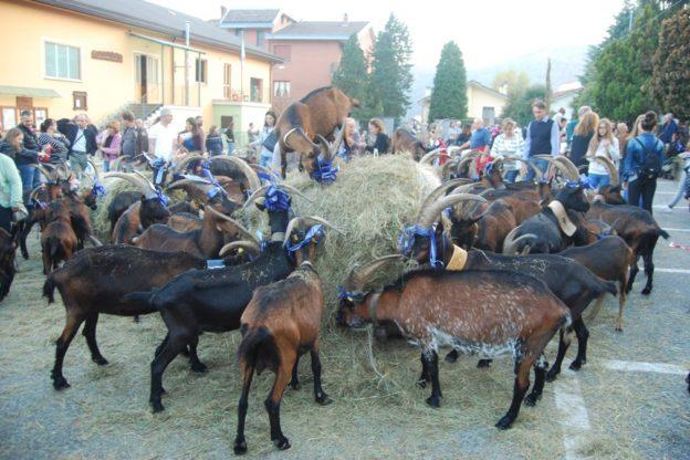 Coazze, la Festa Rurale del Cevrin diventa maggiorenne