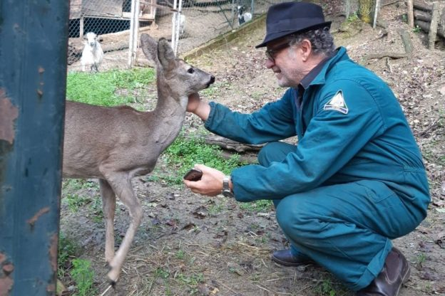 Il capriolo curioso di Giaveno è stato catturato e portato al sicuro