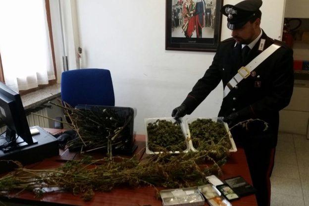 Droga in Valsusa: i Carabinieri trovano due chili di marijuana a Mattie