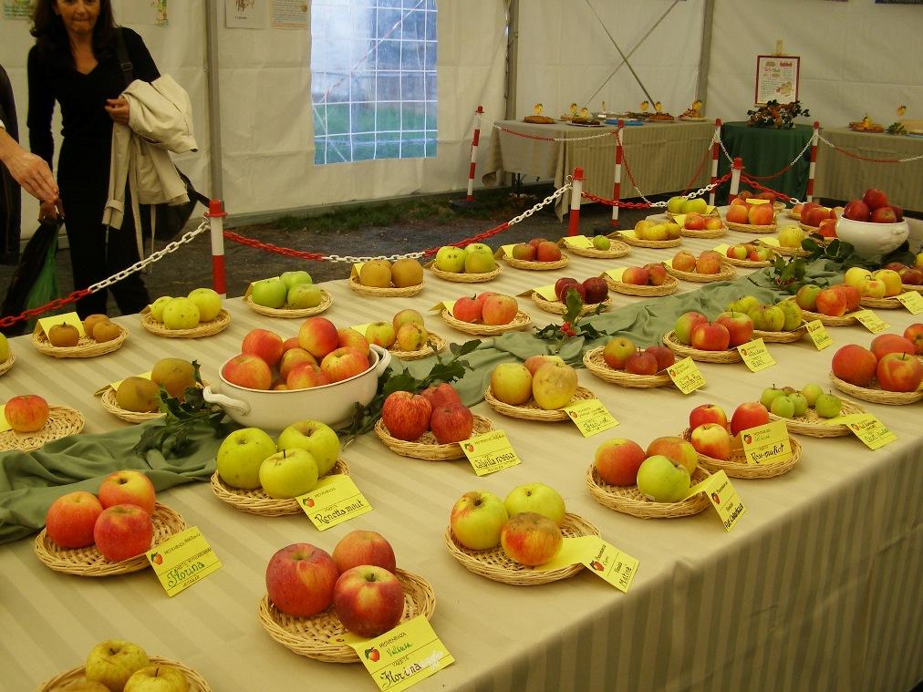 """Domenica 11 novembre, Caprie in festa con """"La mela e dintorni"""""""