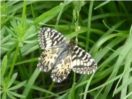 Le ali di una farfalla sulla Torino-Lione