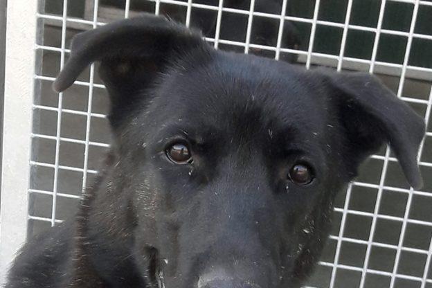 Settembre: un cane valsusino d'adozione che cerca famiglia