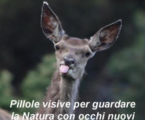 Aperitivo col naturalista all'orto botanico di Torino