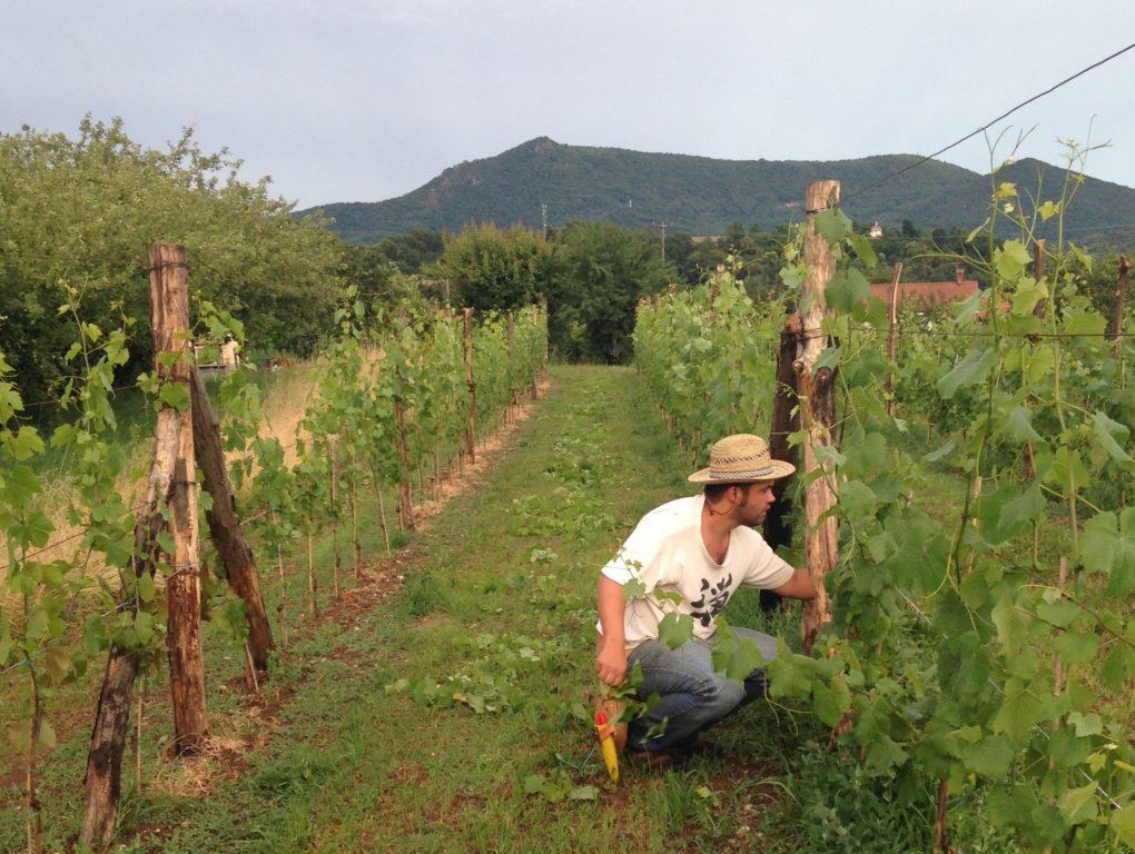 La sfida di Ezio Canale: produrre il vino a Giaveno con le viti di Colpastore