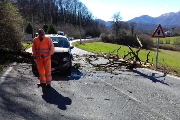 Trana, il vento forte fa cadere un albero su un'auto in transito