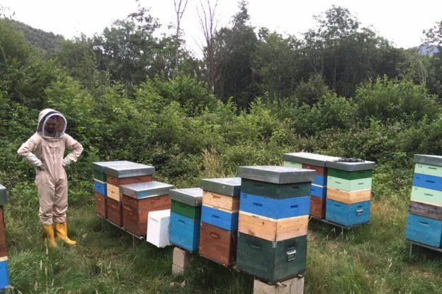 Almese, rubate 34 arnie dall'apiario di Federico Guerra