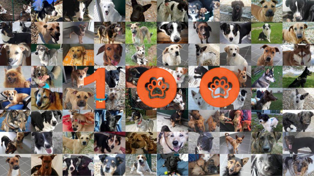 Il canile valsusino ha trovato casa a 107 ospiti!