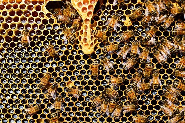 Una serata sull'apicoltura a Caselette per Vicinea