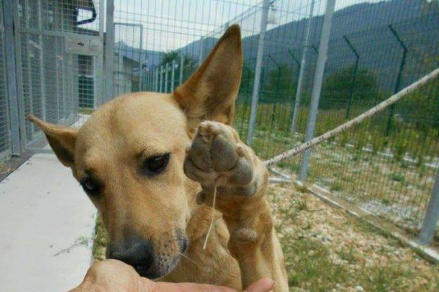 """Le paure dei cani """"curate"""" dal Cento Code di S.Antonino"""