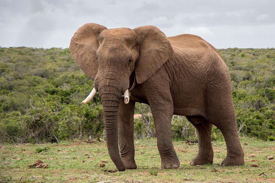 I grandi animali africani a Trana, venerdì 7 giugno