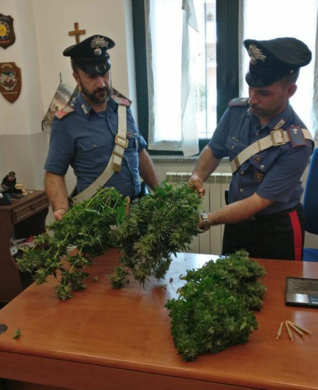 Giaveno, i Carabinieri arrestano un giovane per detenzione di marijuana