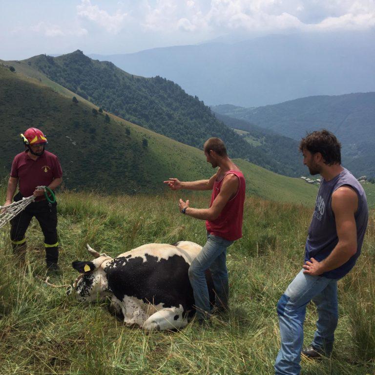 I Vigili del Fuoco recuperano una vacca ferita in Valsusa- Foto