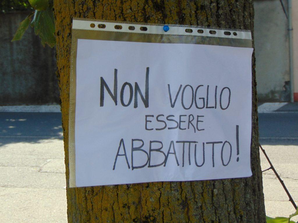 Niente da fare per i sette tigli di Caselette: saranno abbattuti