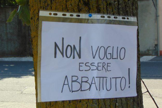 """""""Non abbattete quei tigli"""": picchetto a Caselette in difesa del verde pubblico"""
