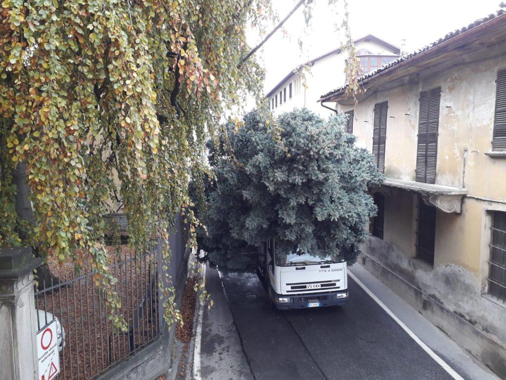 Giaveno, in arrivo il gigantesco albero di Natale- Foto