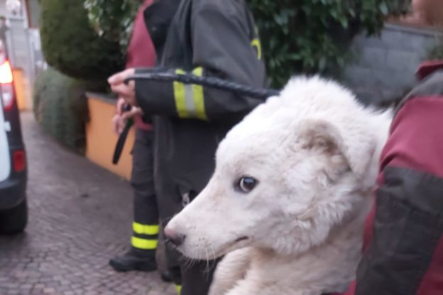 Giaveno, i Vigili del Fuoco salvano un cucciolo di maremmano
