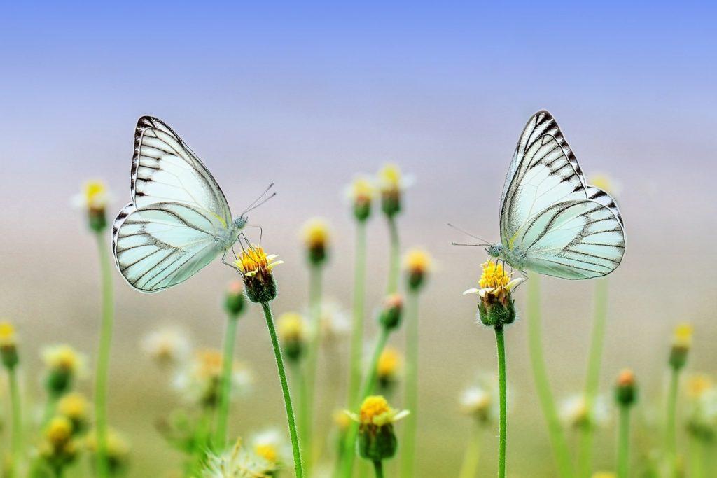 """Luca Giunti parlerà di """"Farfalle e biodiversità"""" al Castello di Susa"""