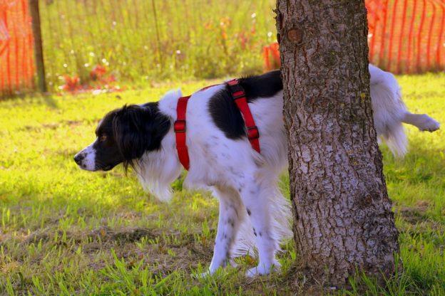 Il cane fa pipì in strada? A Giaveno il proprietario deve pulire