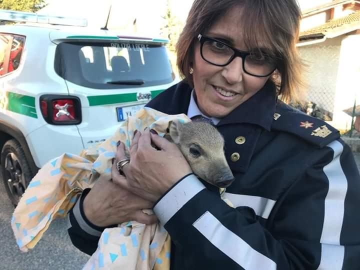 Giaveno, salvato un cinghialotto durante l'incendio a Villanova