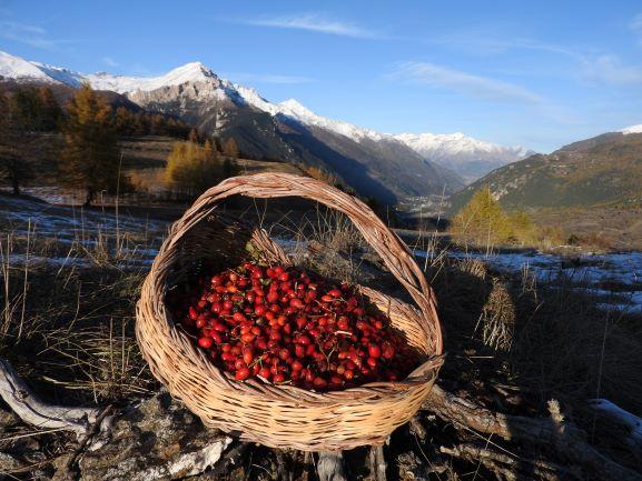 Erbe della Val di Susa e antichi rimedi per affrontare l'inverno
