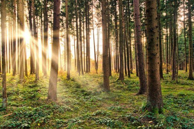 """Barone (Coldiretti): """"Riprendano le attività nelle foreste"""""""