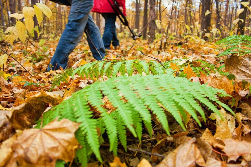 Chiusa di San Michele, la Passeggiata Ecologica durerà tutta l'estate