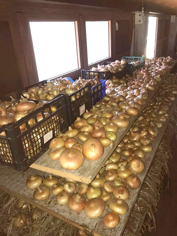 Sabato 26 una serata dedicata alla cipolla di Drubiaglio