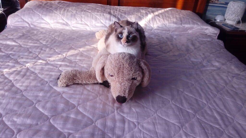 La storia della gatta Sally, scomparsa da Bussoleno e riapparsa a Condove