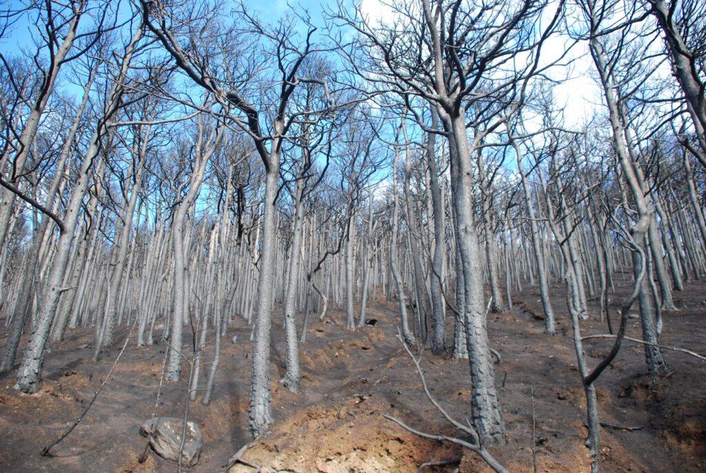 """Mompantero, 300 piantine """"ripopoleranno"""" i boschi devastati dagli incendi del 2017"""