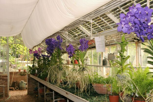 """L'8 e 9 maggio al Castello di Pralormo arriva """"Madamigella Orchidea"""""""