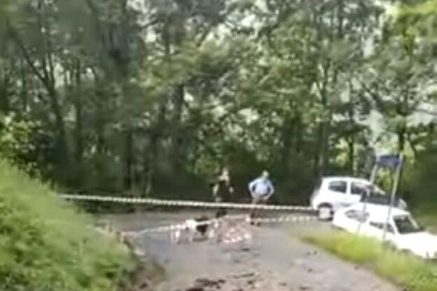 Coazze, fulmine si abbatte su un albero e distrugge un tratto di asfalto