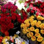 Nel fine settimana, a Cesana, torna la Festa del Maggiociondolo